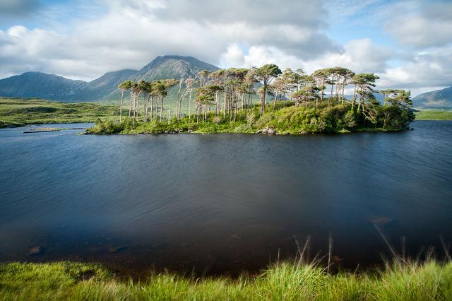 Pine island County Galway