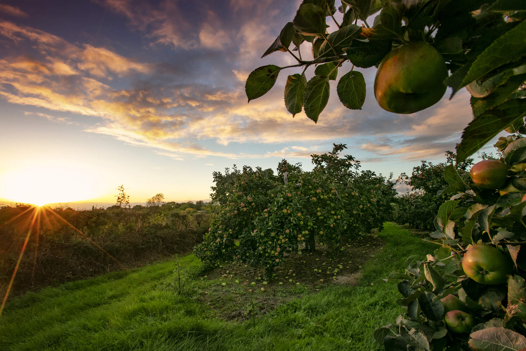 Orchard County Armagh