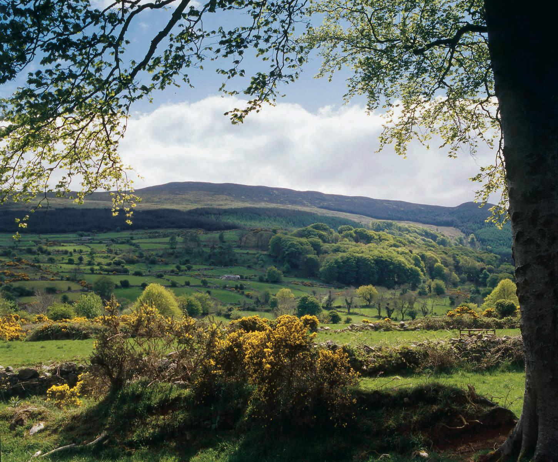 Slieve Gullion County Armagh