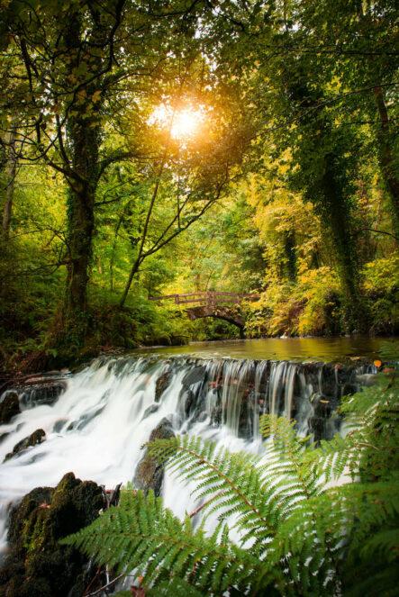 Dun Na Ri Forest Park